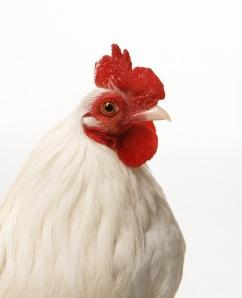 chickenjennys