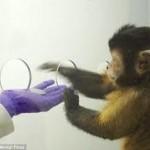 monkey1-150x150